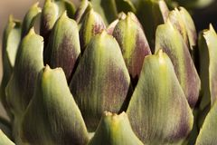 Close-up of artichoke stock images
