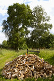 Chop wood. Chopped wood on a background of a large tree Stock Photography