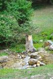 Choped drzewo Zdjęcia Royalty Free