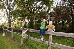 Chłopiec i koty na ogrodzeniu Zdjęcie Royalty Free
