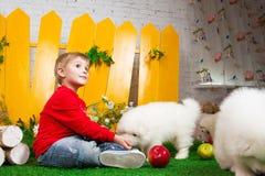 Chłopiec trzy lat siedzi z białymi szczeniakami Obrazy Stock