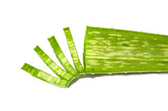 Chopped Aloe vera Royalty Free Stock Images
