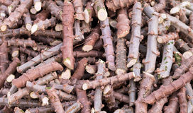 Chopped cassava tree soak stimulants roots. Chopped cassava tree for planting Royalty Free Stock Photos