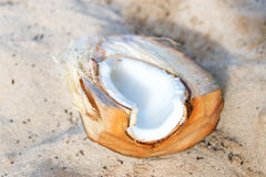 Chopped coconut with coconut on the beach. On the sand Royalty Free Stock Photography