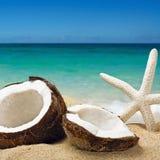 Chopped coconut on sea-beach Stock Photo
