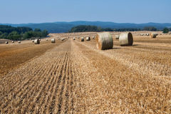Chopped corn fields with straw bales Royalty Free Stock Images