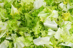 Chopped escarole endive Royalty Free Stock Images