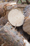 Chopped firewood detail. Stock Image