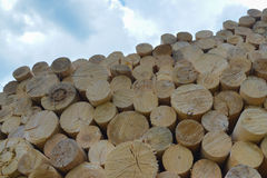 Chopped firewood. Firewood stacked and prepared for winter. Blue sky at background. Stock Photography
