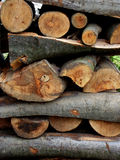 Chopped firewood logs in a pile Stock Photos