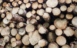 Chopped firewood logs stacked up in a pile Stock Image