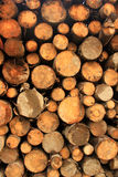 Chopped firewood logs for winter fire Stock Image