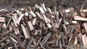 Chopped firewood stack in  spring  forest stock footage