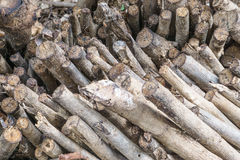 Chopped firewood on a stack Stock Image