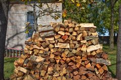 Chopped Firewood Stacked Between Two Trees Stock Image