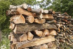 Chopped firewood for the winter, the wood of the plum tree Royalty Free Stock Images