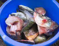 Chopped fish. In a blue bowl Royalty Free Stock Photo