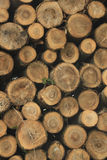 Chopped fuel wood in a forest Stock Photos