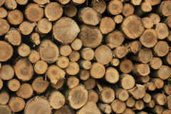 Chopped fuel wood in a forest Royalty Free Stock Photography