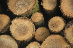 Chopped fuel wood in a forest Stock Images
