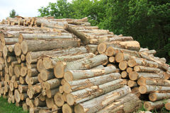 Chopped fuel wood in a forest Royalty Free Stock Images
