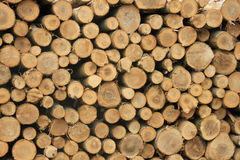 Chopped fuel wood in a forest Stock Image