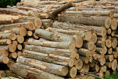Chopped fuel wood in a forest Royalty Free Stock Photo