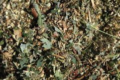 Chopped garden rubbish Royalty Free Stock Photos