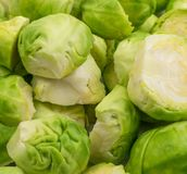 Green Brussel Sprouts. Chopped Green Brussel Sprouts Texture Closeup. Cabbage Background Top View Stock Photo