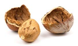 Chopped hazelnuts close up isolated on white background Stock Image