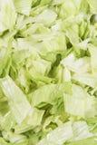 Chopped iceberg salad Stock Photography