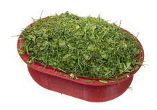 Chopped lawn green grass Stock Images