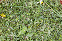 Chopped lawn green grass Royalty Free Stock Image