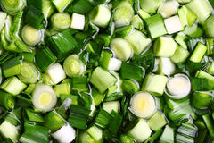 Chopped leeks in the water Royalty Free Stock Image