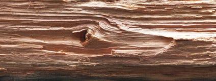 Chopped log. Panorama Stock Photo