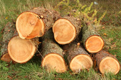 Chopped Logs. In a Pile stock photography