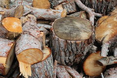 Chopped logs. Close up of pile of chopped logs with bark and tree ring detail Stock Images
