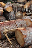 Chopped logs. Pile of chopped logs with bark detail Stock Images