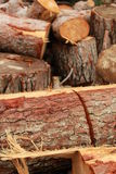Chopped logs Stock Images
