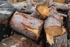 Chopped logs. Pile of chopped logs with bark and tree ring detail Stock Images