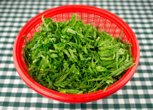 Chopped mustard greens in a red strainer bowl Royalty Free Stock Photos
