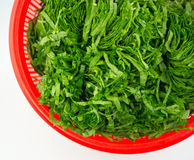 Chopped mustard greens in a red strainer isolated on white Stock Photos
