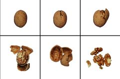 Chopped nuts Stock Images