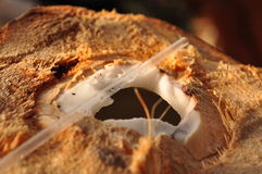 Chopped open coconut and a straw. A coconut chopped open and ready for drinking from it royalty free stock photo