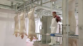 Chopped pig at a factory stock video footage