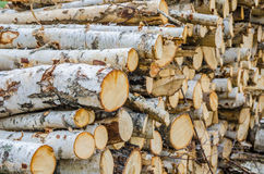 Chopped pile of wood Royalty Free Stock Image