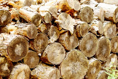 Chopped pine fire wood. Stock of pine firewood logs Stock Photography