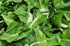Chopped raw chard leaves Stock Images