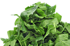 Chopped raw chard leaves Stock Image