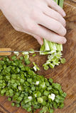 Chopped scallions Royalty Free Stock Photo
